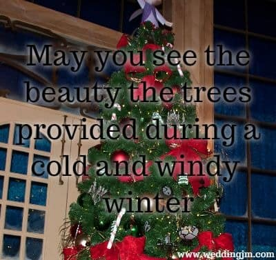 May you see the beauty the trees provided during a cold and windy winter.